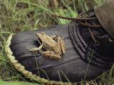 A Frog Rests Upon a Rubber Boot Photographic Print by Bill Curtsinger