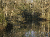 Trees Cast Reflections in a Woodland Waterway Photographic Print by Raymond Gehman
