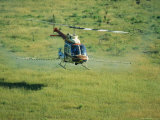 Herbicide Spraying of Fennel Field by Helicopter Photographic Print by Rich Reid