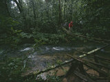 A Woman Crosses a Rope Bridge Across a Rain Forest River Photographic Print by Tim Laman