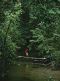 A Woman Crosses a Fallen Tree Across a Rain Forest River Photographic Print by Tim Laman