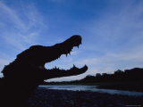A Silhouetted Black Caiman with its Mouth Open in Warning Photographic Print by Joel Sartore