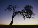Oak Tree Silhouetted against Sunset Sky Photographic Print by Jason Edwards