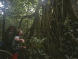 A Man Examines a Giant Strangler Fig Tree in a Rain Forest Photographic Print by Tim Laman