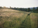 A Dog Waits for its Master in a Swath of Freshly Mown Field at Sunset Photographic Print by Bill Curtsinger