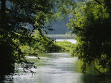A Riparian Forest Borders the Susquehanna River Photographic Print by Raymond Gehman
