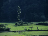 Farmers Between Rice Paddies, Yangdi Valley, Guilin, Guangxi, China Photographic Print by Raymond Gehman