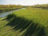 Wetlands of the Mackenzie River Photographic Print by Raymond Gehman