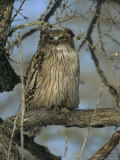 Portrait of a Rare Blakistons Fish Owl, One of the Worlds Largest Species of Owls Photographic Print by Tim Laman