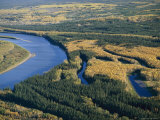A View of Spruce Trees Along the Mackenzie River at Camsell Bend Photographic Print by Raymond Gehman