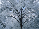A Winter Wonderland of Snow-Covered Trees Photographic Print