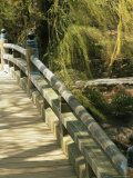 Limbs of a Willow Rustle over the Footbridge in the Japanese Garden Reproduction photographique par Paul Damien