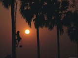 Silhouette of a Toddy, or Palm Sap, Collector Scaling a Palm Tree Photographic Print by James L. Stanfield