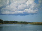 Ducks Fly Above the Mackenzie River Beneath White Clouds Photographic Print by Raymond Gehman