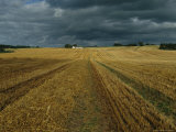 Wheat Fields Near Vorbasse, the Site of an Ancient Viking Village Photographic Print by Sisse Brimberg