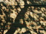 A Trees Shadow Cast on the Brick Wall of the English Walled Garden Photographic Print by Paul Damien