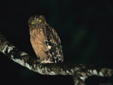 A Buffy Fish Owl Perched on a Lichen-Covered Tree Branch Photographic Print by Tim Laman
