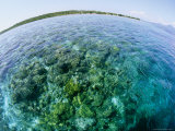 Fish-Eye View of Clear Water over Reef off of Bunaken Island Photographic Print by Wolcott Henry