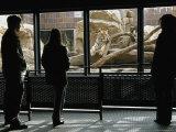 Tourists Observe Khuntami, a Siberian Tiger, in His Enclosure Photographic Print