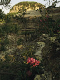 View of the Pinnacle of Pilot Mountain with Blooming Rhododendron Photographic Print by Raymond Gehman