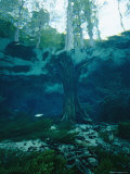 View of a Tree Trunk Underwater in Blue Springs, Florida Photographic Print by Nick Caloyianis