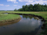 The Little River Winds Through Coastal Salt Marshes and Wetlands Photographic Print by Stephen St. John