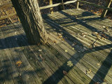 Wooden Observation Deck with Tree Trunk at the Nature Center Photographic Print by Raymond Gehman