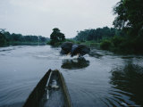 A Forest Elephant Charges a Canoe Photographic Print by Michael Nichols