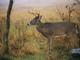 A 8-Point White-Tailed Deer Buck on a Foggy Morning Photographic Print by Raymond Gehman