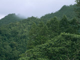 Elevated View of Fijian Forests with Morning Fog Photographic Print by Tim Laman