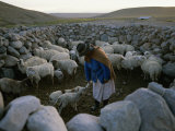 Aymara Woman, Surrounded by her Herd, Bottle Feeds Two Lambs Photographie par Joel Sartore