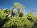 Spanish Moss Adorns the Trees in South Florida Photographic Print by Klaus Nigge