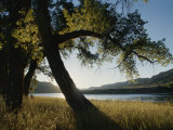Twilight View of Missouri River and Cottonwood Tree, Photographic Print