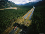 Overpass for Grizzlies and Other Wildlife Spans an Alberta Highway Photographic Print by Joel Sartore