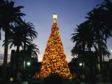 Illuminated Christmas Tree at Busch Gardens Photographic Print by Richard Nowitz