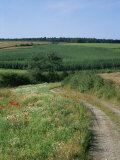 Dirt Road Running Past Hop Fields outside Munich Photographic Print by Taylor S. Kennedy