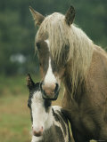 Portrait of a Wild Pony and her Foal Photographic Print by James L. Stanfield