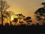 Trees Silhouetted at Sunset Photographic Print by Anne Keiser