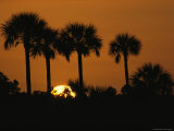 Silhouette of Palm Trees at Sunset Photographic Print by Klaus Nigge