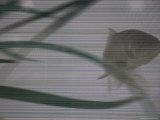 Fish in an Aquarium as Seen Through a Screen Photographic Print by Cotton Coulson