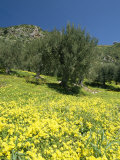 Hilly Spanish Countryside with Wildflowers Photographic Print by Richard Nowitz