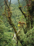 Parasitic Plants Inhabit the Forest of the Huabayacu River Valley Photographic Print by Stephen Alvarez