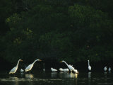 Egrets, Ibises, and Herons Wade in the Water Photographic Print by Klaus Nigge