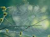 Spiderweb Spun Between Tree Branches Reflects the Sunlight Photographic Print by Phil Schermeister