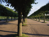 Manicured Row of Trees in One of the Formal Gardens of the Peterhof Photographic Print by Sisse Brimberg