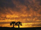 The Silhouette of a Pair of Palm Trees at Sunset Photographic Print by Klaus Nigge