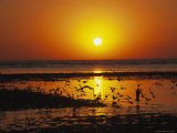 Seabirds Silhouetted Against the Sea in the Glow of the Setting Sun Photographic Print by Steve Winter