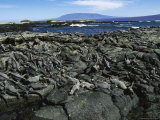 Iguanas Bask on Rocks at the Oceans Edge Photographic Print by Steve Winter