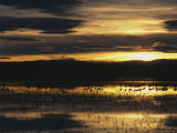 Silhouetted Sandhill Cranes in Marsh at Sunset Photographic Print by Marc Moritsch