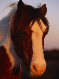 Chincoteague Pony in the Light of a Setting Sun Photographic Print by Nick Caloyianis